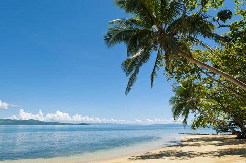 Fiji, Beach And Cocopalm Trees At Matangi Private Island Resort.
