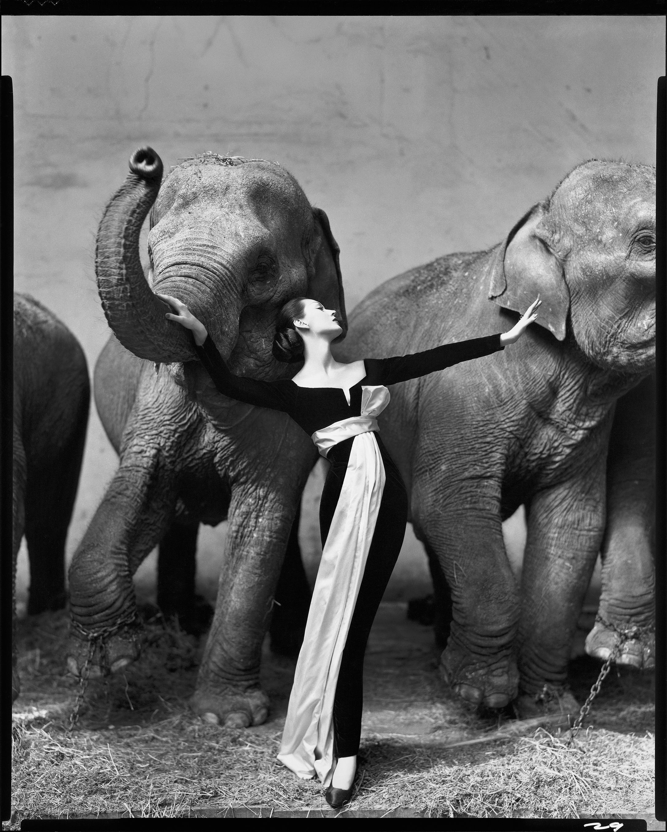Harper\u0027s BAZAAR Photographs From 1950s , Richard Avedon