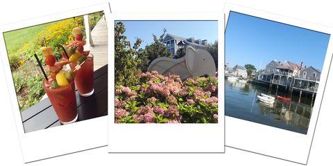 Photographic paper, Photography, Adaptation, Flowerpot, Art, Collage, Room, Landscape, Plant, Tourism,