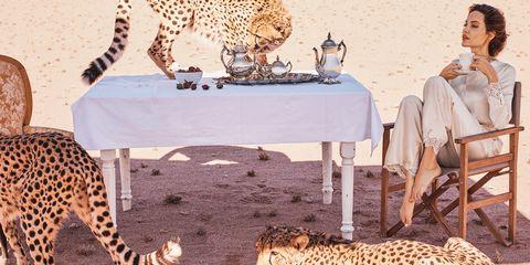 Terrestrial animal, Wildlife, Felidae, Adaptation, Cheetah, Table, Furniture, Fawn,