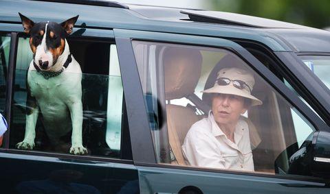 Vehicle door, Canidae, Dog, Vehicle, Car, Automotive exterior, Automotive window part, Windshield, Auto part, Driving,