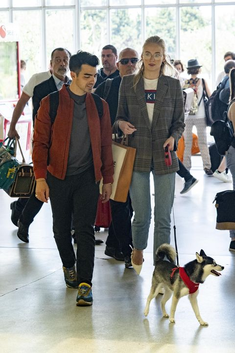 Dog, Canidae, Conformation show, Dog breed, Fashion, Carnivore, Rare breed (dog), Companion dog, Jeans, Fur,