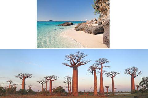 Natural landscape, Tree, Nature, Sky, Woody plant, Plant, Adaptation, Ecoregion, Landscape, Plant community,