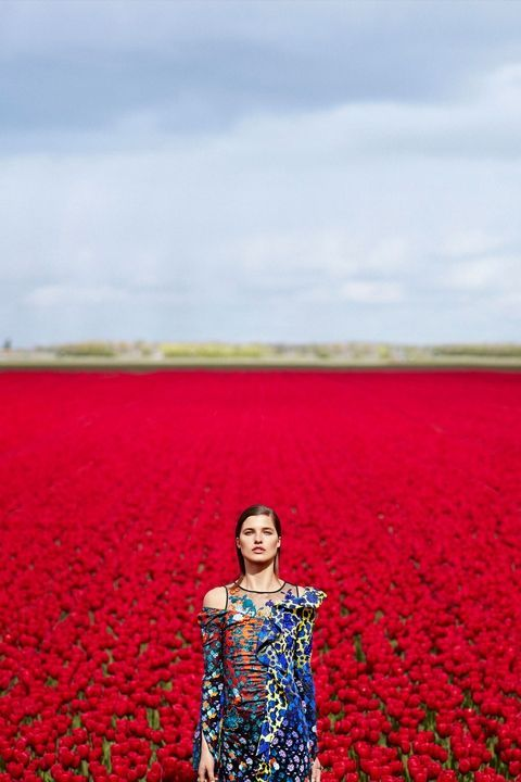 Red, Field, Carpet, Coquelicot, Flower, Plant,