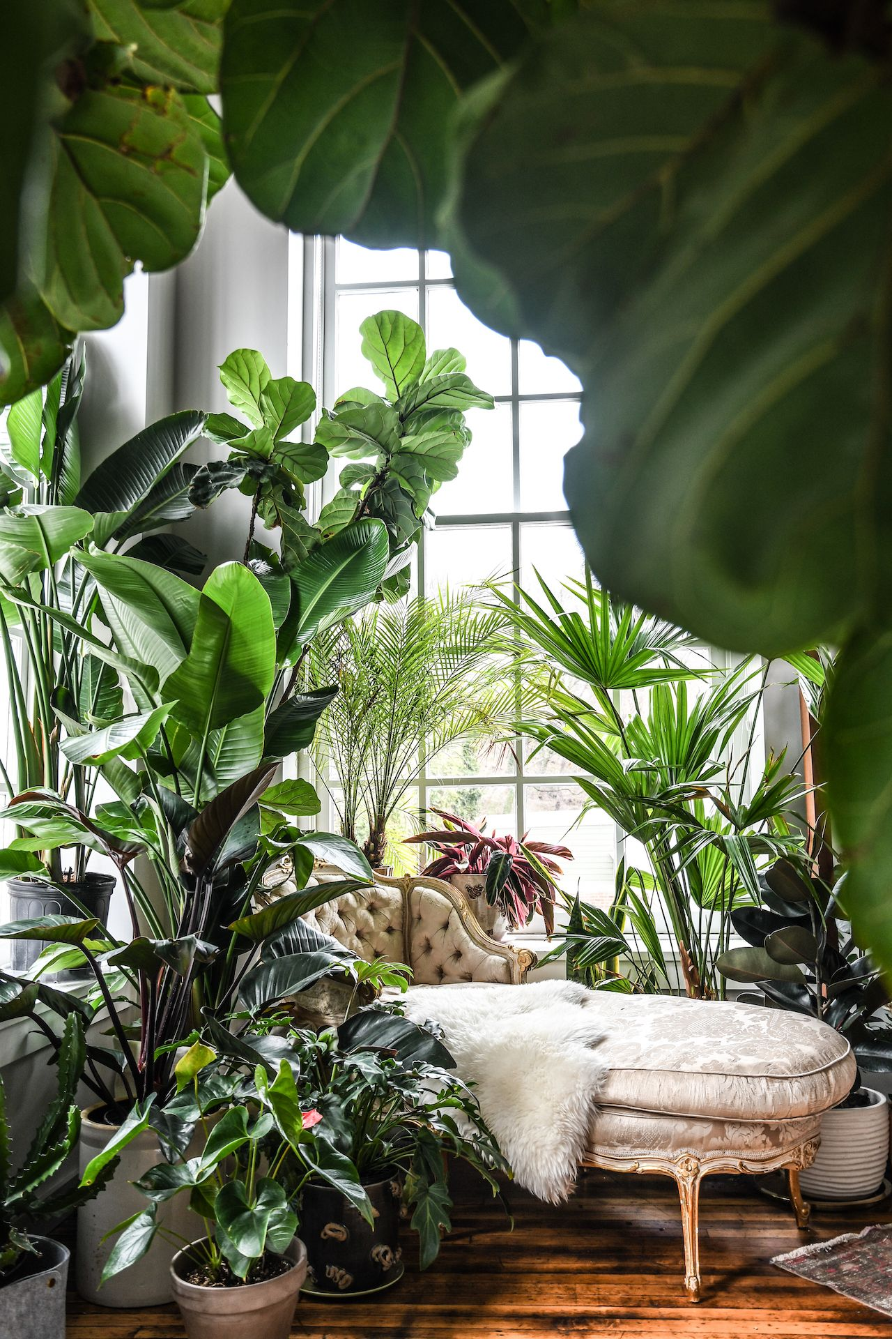 The 30 Best Indoor Plants for Apartments to Buy Online