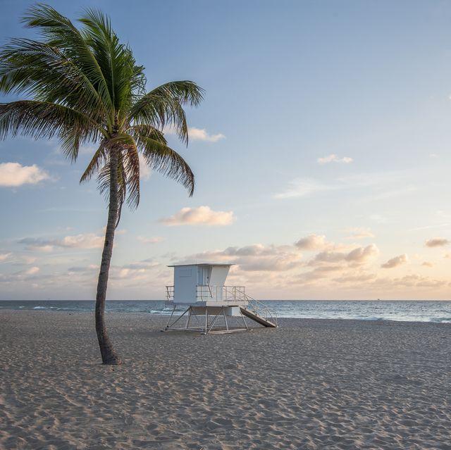 health benefits of beach palm