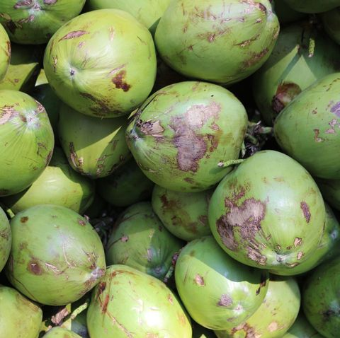 Green coconut: health benefits.