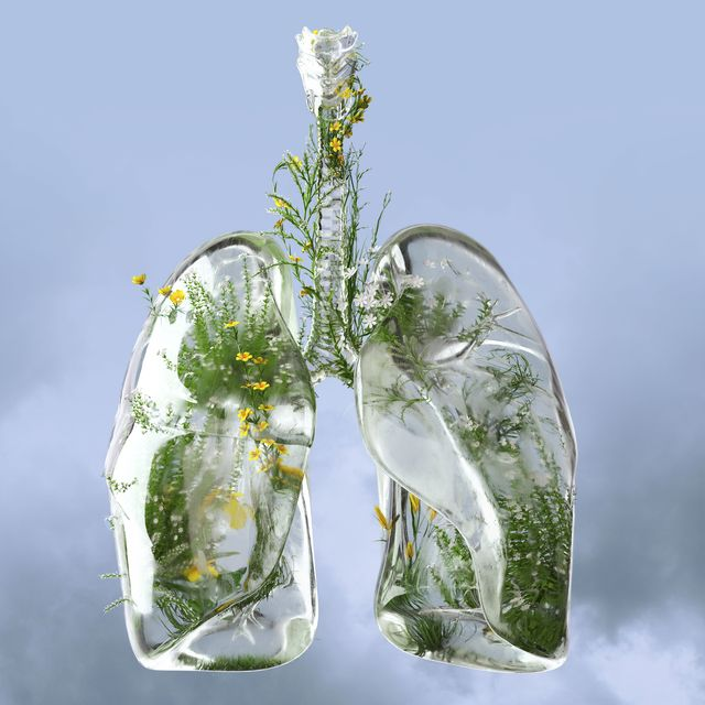 digital generated image of lungs made out of frosted glass and filled with plants and flowers on blue background breathe easier