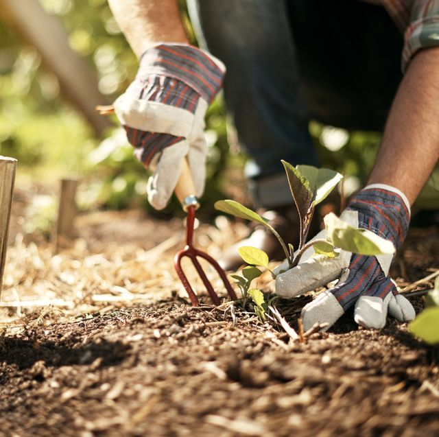 healthy soil is the key to feeding the world
