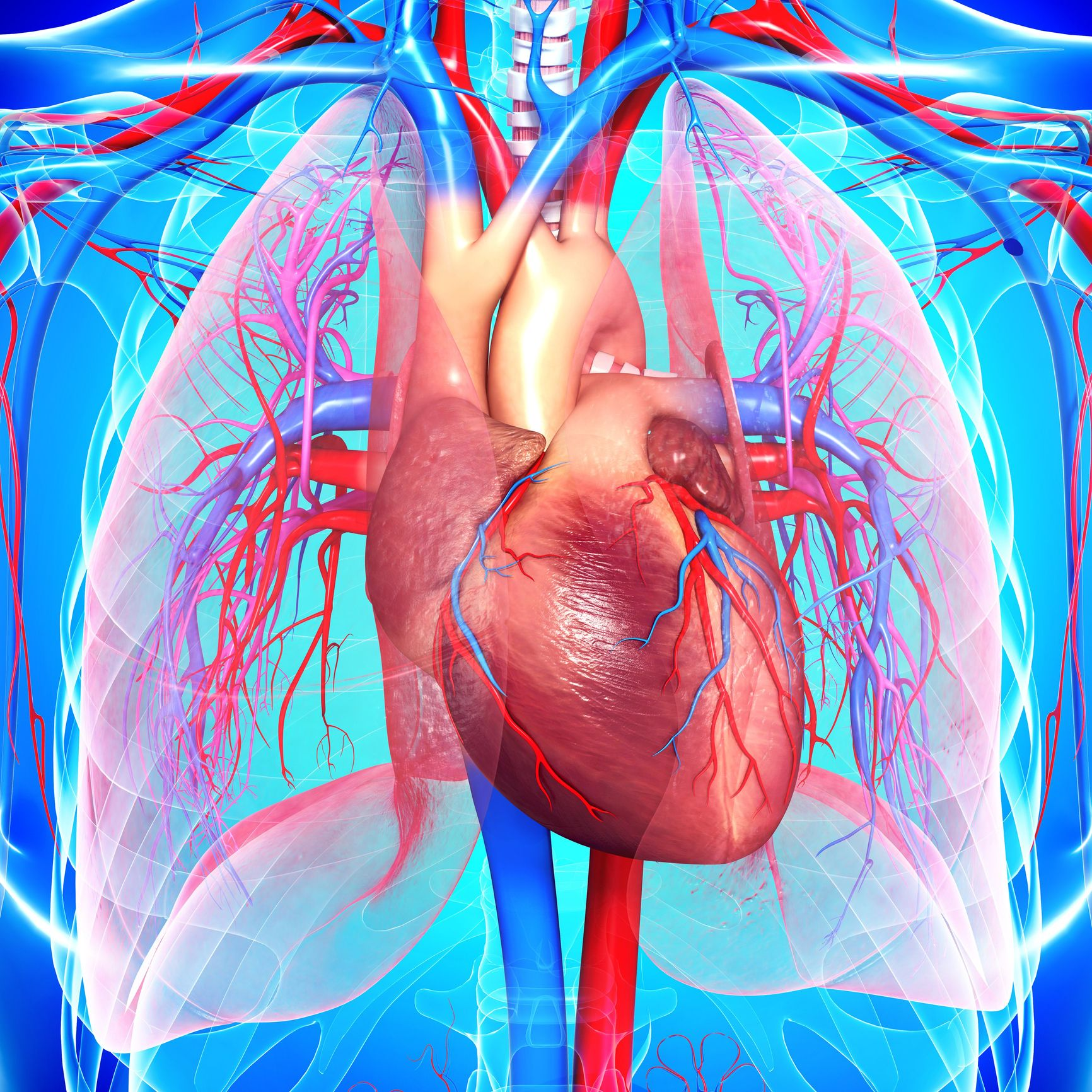 Heart disease: symptoms, causes, diagnosis and treatment