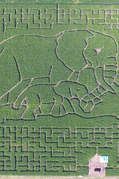 heartland country corn maze best corn mazes near me