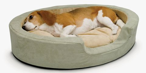 Dog bed, Canidae, Dog, Dog breed, Companion dog, Dog supply, Furniture, Carnivore, Pet supply, Harrier,