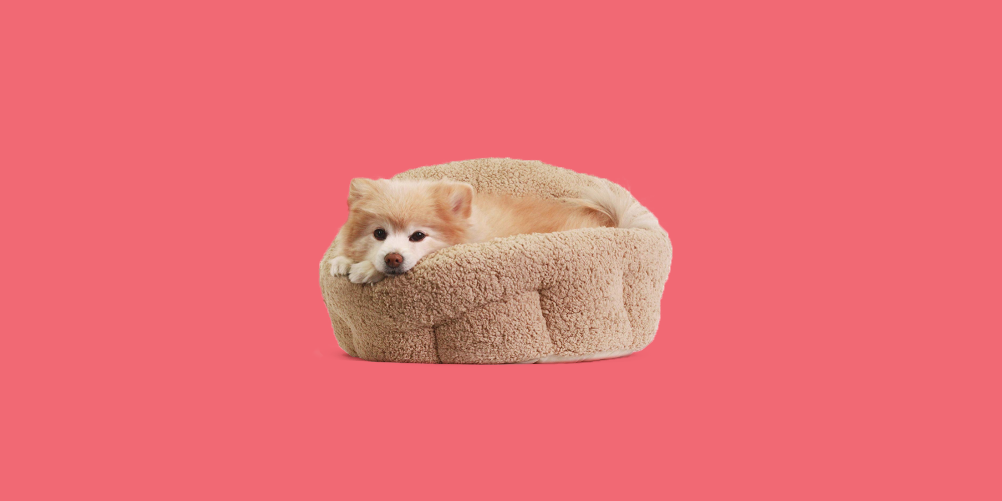 Heated Dog Beds To Keep Your Pup Super Cozy