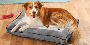 Lidl launches heated dog bed