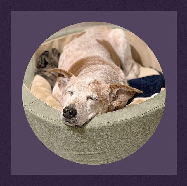 dog sleeping in heated pet bed