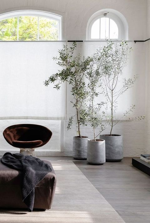 indoor trees decor ideas