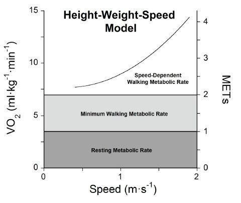 How Height Affects Calorie Burning