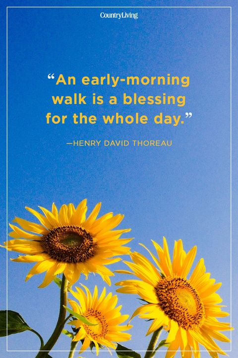 30 Best Good Morning Quotes - Good Morning Quotes For Her