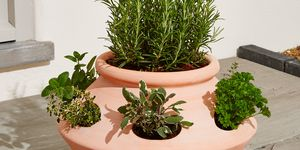 Herb Babylon Terracotta Planter, Marks & Spencer