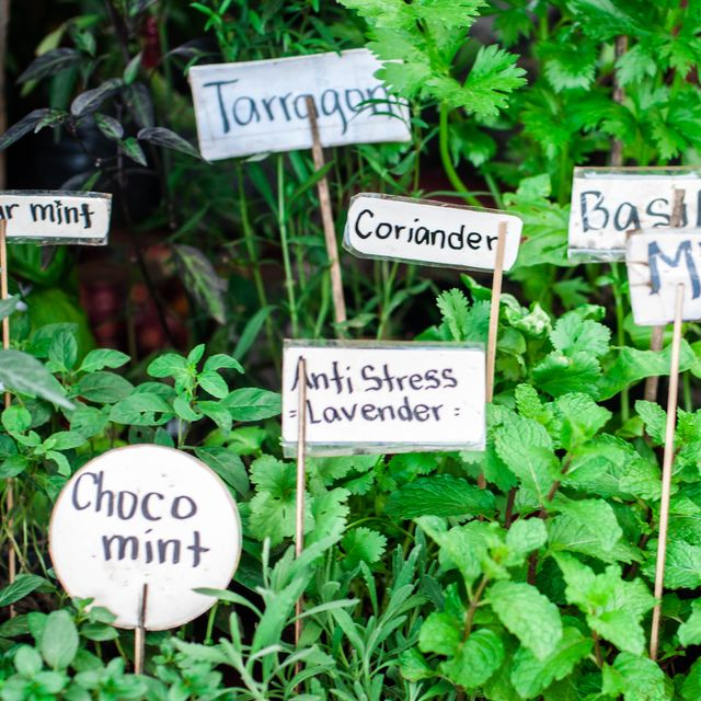 variety of herbs in the garden with labels