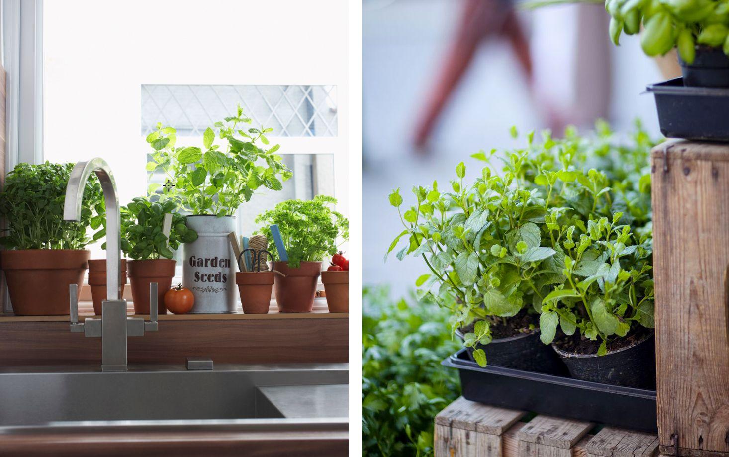 Indoor Herb Garden How To Make A Kitchen Herb Garden