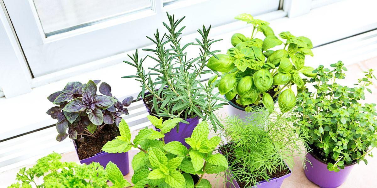 Indoor Herb Garden Diy Herb Garden