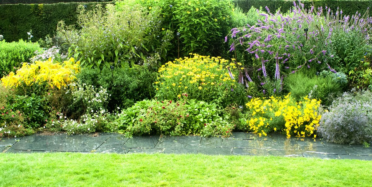 4 front garden plants that can prevent your home flooding