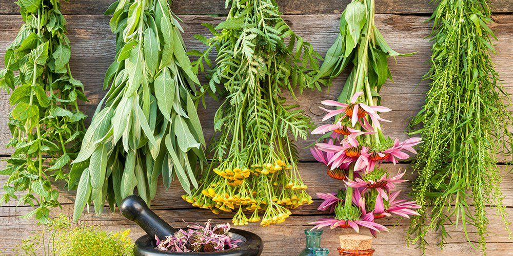 30 Herbs That Fight Cold And Flu   Prevention