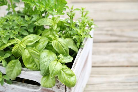 How To Grow Your Own Herb Garden - Herb Plants and Herb Seeds