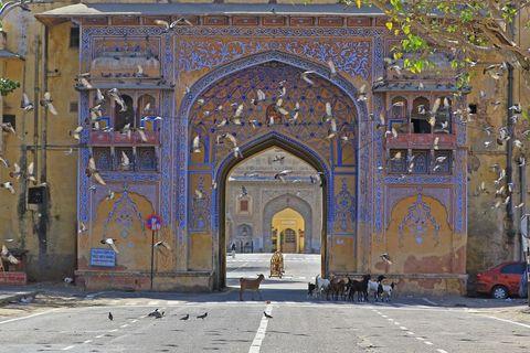coronavirus emergency in jaipur