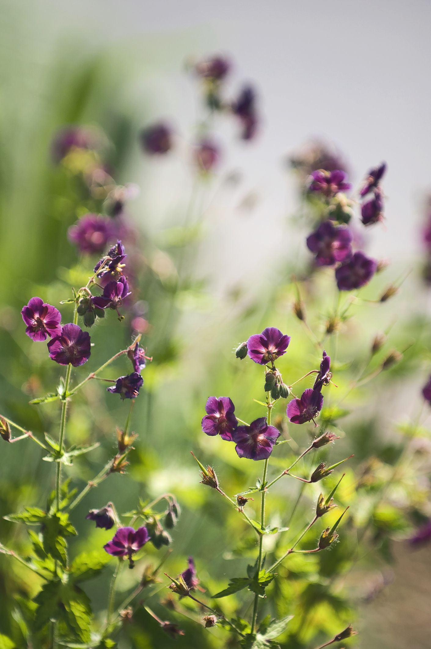 7 plants for your garden that can survive all types of weather