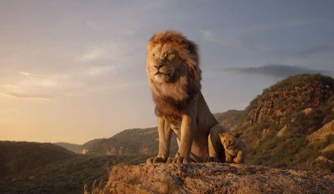Vertebrate, Lion, Mammal, Masai lion, Wildlife, Felidae, Big cats, Terrestrial animal, Carnivore, Mane,