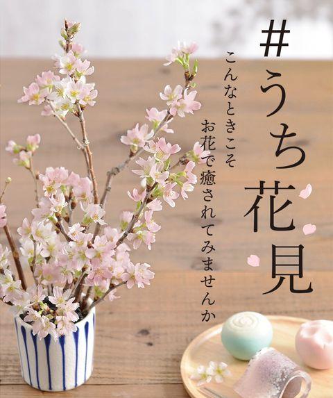 日比谷花壇 「#うち花見」キャンペーン