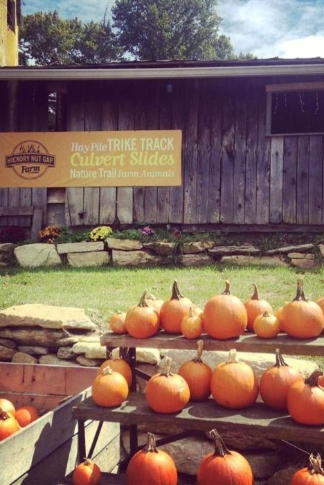hickory nut gap farm best pumpkin farms near me