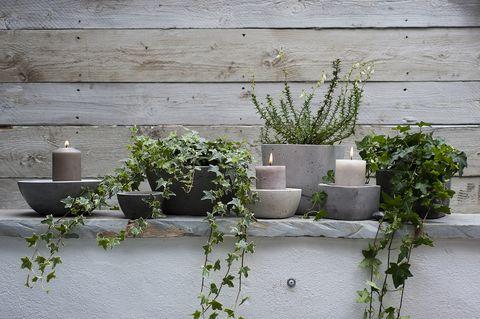 hiedra interior La Hiedra Cuidados E Ideas Para Decorar Decorar Con Plantas