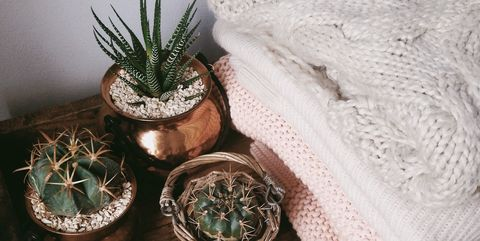 High Angle View Of Cactus Plants On Table At Home