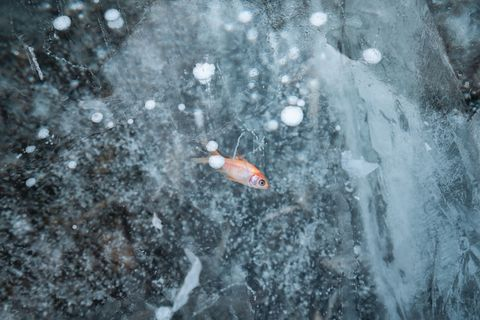 High Angle View Of Fish In Frozen Lake