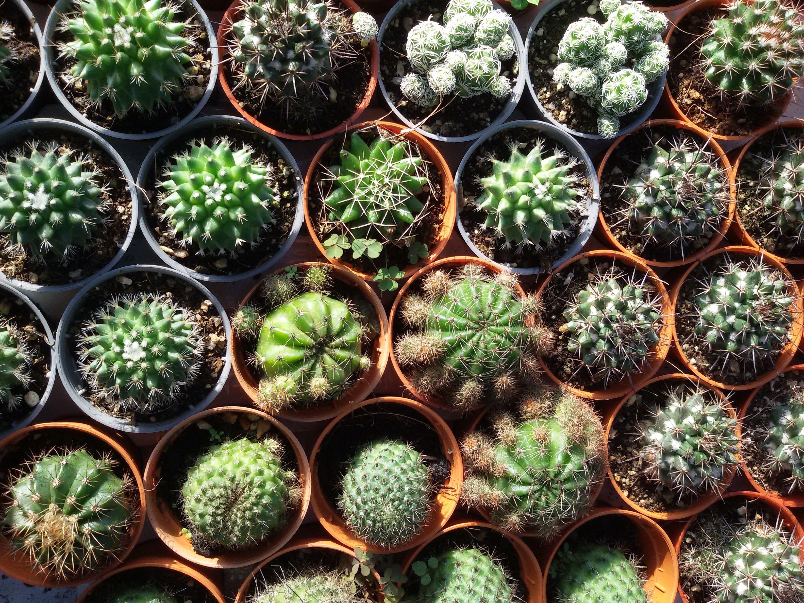House Beautiful & Column Cactus