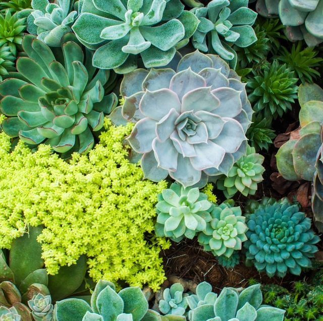 a high angle view of variety of succulent plants