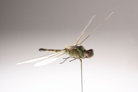 CIA-dragonfly