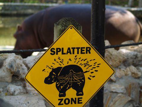 nijlpaarden slingeren poep