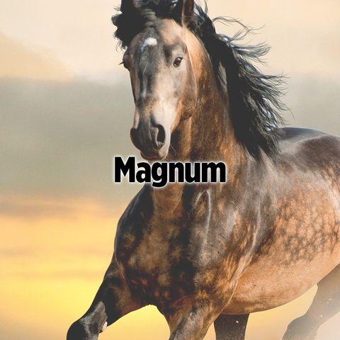 Brown, Vertebrate, Horse, Terrestrial animal, Snout, Ecoregion, Mustang horse, Neck, Atmospheric phenomenon, Stallion,