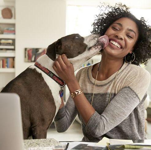 hobbies that make money - pet sitting