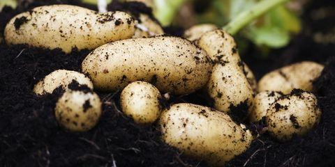 Hoe aardappelen je kunnen helpen afvallen
