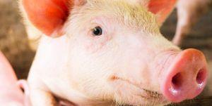 hoe-goed-biologisch-vlees
