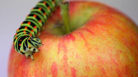worm-wormen-appel-fruit
