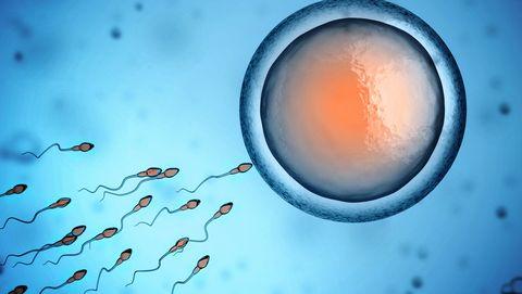 sperma-eicel-weg-baarmoeder