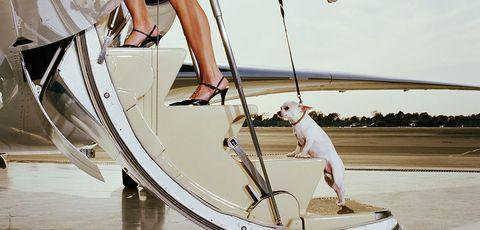Leg, Footwear, Vehicle, Boat, Recreation, Sailing, Shoe, Canidae, Sailboat, Leisure,