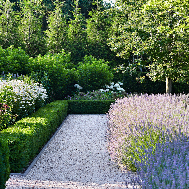 hollander lavender edging along gravel path