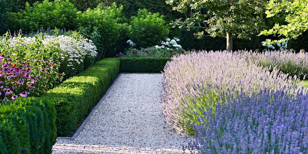 10 Perfect Plants That Make For Captivating Walkway Borders
